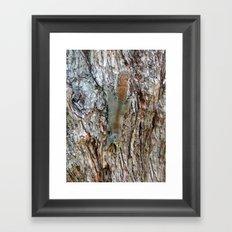Find The Squirrel Framed Art Print