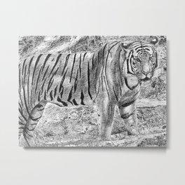 Malayan Tiger (Harimau) Metal Print