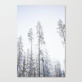 Snowy Trees Part II Canvas Print