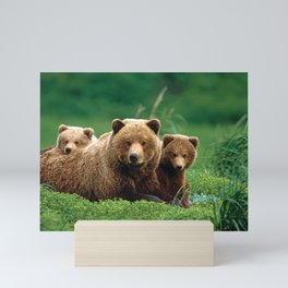 Spectecular Grizzly Bear Mother With Adorable Two Cubs In Meadow Ultra HD Mini Art Print
