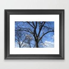 After Winter Trees Framed Art Print