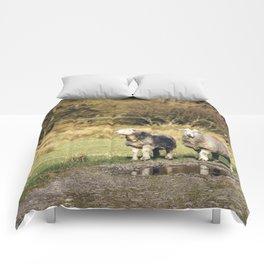 Herdwick sheep stood on footpath. Cumbria, UK. Comforters