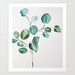 Eucalyptus leaves, illustration, botanical Art Print