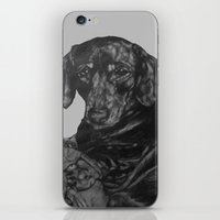 dachshund iPhone & iPod Skins featuring Dachshund by Natasha Maiklem