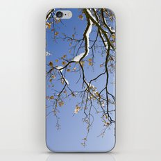 Snowy Branch iPhone & iPod Skin