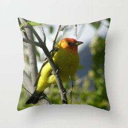 Taninger, male Throw Pillow