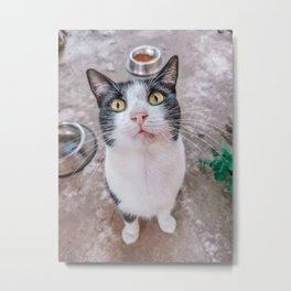 Nusita a stray cat Metal Print
