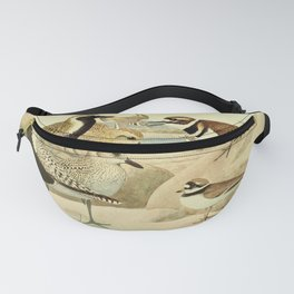 Vintage Print - Plovers, from Birds of New York (1910) Fanny Pack