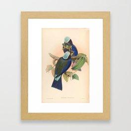 Purple Winged Roller Vintage Birds Of Asia Coracias Temmincki Framed Art Print