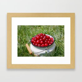 Prunus cerasus sour cherry fruits Framed Art Print