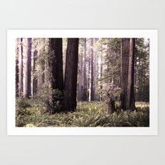 Redwood Forest Art Print