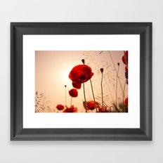 Poppy flower in the sun Framed Art Print