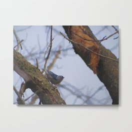 NutHatch Part II Metal Print