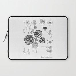 Begonia cabanillasii by Yu Pin Ang Laptop Sleeve