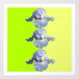 SNOW WHITE SPRING IRIS  GREEN-YELLOW  FLOWERS ART Art Print