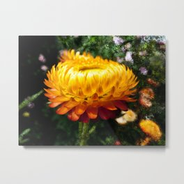 Xerochrysum bracteatum, Flower with added texture Metal Print