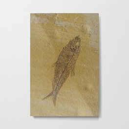 Fish Fossil Metal Print