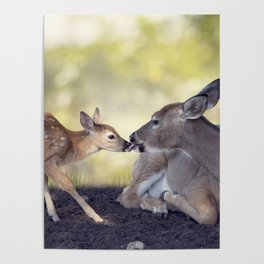 White-tailed female deer with  her  little baby Poster