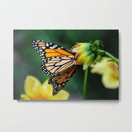 """Butterfly"" Metal Print"