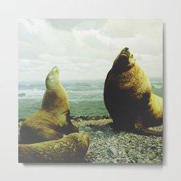 Sea Lions Metal Print