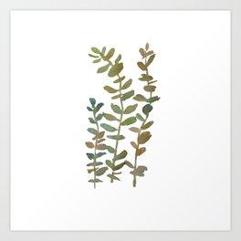 Eucalyptus Braches Art Print