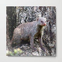 Mongoose camouflage Metal Print