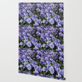 Pansy flower Wallpaper