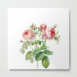 Vintage & Shabby Chic - English Roses Flower Garden Shrub Metal Print