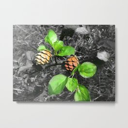 Forest Cones Metal Print