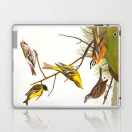 Arkansaw Siskin Bird Laptop & iPad Skin