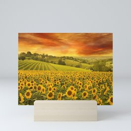 Red sunset over the rolling sunflowers and sunflower fields of Tuscany, Italy Mini Art Print