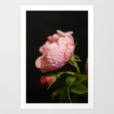 Weeping Rose II Art Print