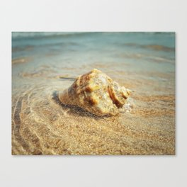 whelk in the sea Canvas Print