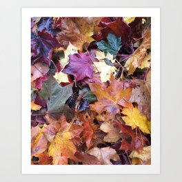 Fallen Fall Leaves Art Print