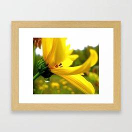 Goldie Locks Framed Art Print