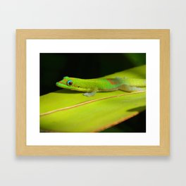 Hawaiian Gecko Framed Art Print