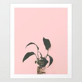 Spathiphyllum II Art Print