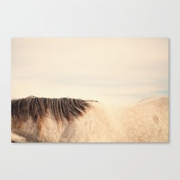 All The Wild Horses Canvas Print