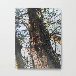 Tree - Nature Photography Metal Print
