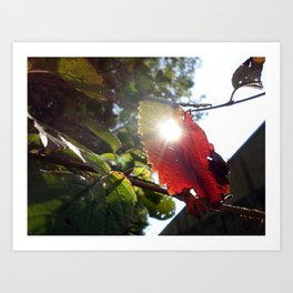 Sunshine Through the Fading Fall Art Print