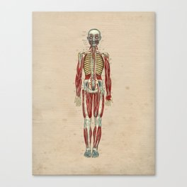 Human Nerves Anatomy 1841 Print Canvas Print