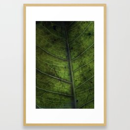 Leaf Five Framed Art Print