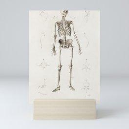 Human Skeleton Anatomy Illustration Mini Art Print