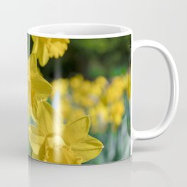 Daffodils in a field Coffee Mug