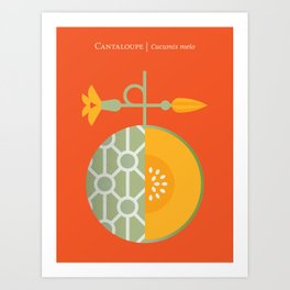 Fruit: Cantaloupe Art Print