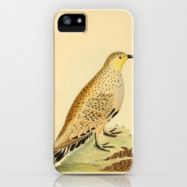 Libyan Grouse11 iPhone Case