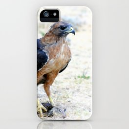 Hungry Red Teiled Hawk iPhone Case