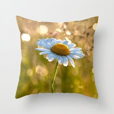Daisy in a meadow after rain at backlight Throw Pillow