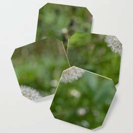 Shower head, infruttescence of the dandelion flower Coaster
