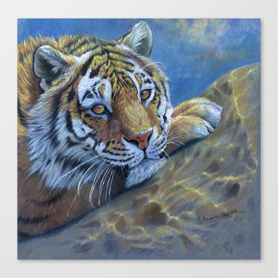 Tiger on the rock CC117 Canvas Print